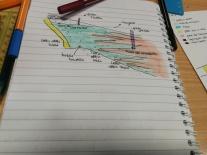 pfas_land_articolo_scuola_secondo_ciclo43